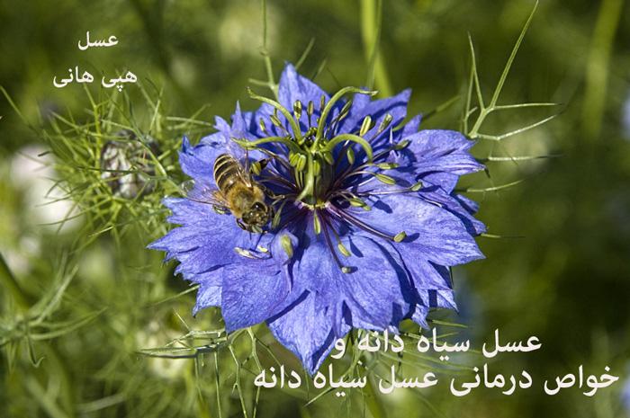 خواص عسل سیاه دانه