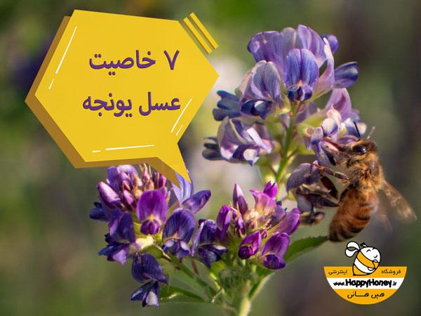 7 خاصیت عسل یونجه